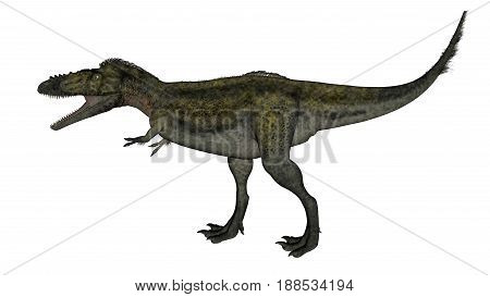 Alioramus dinosaur walking and roaring isolated in white background - 3D render