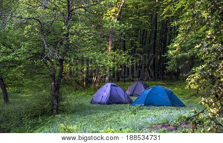 three tourist tents in the morning forest