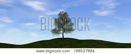 Single tree by beautiful day - 3D render