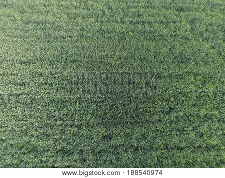 Texture Of Wheat Field. Background Of Young Green Wheat On The Field. Photo From The Quadrocopter. A