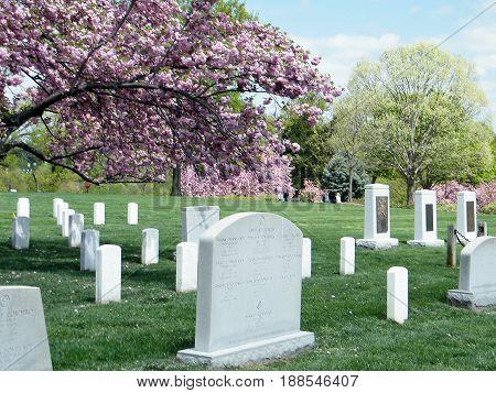 Arlington, USA - April 9, 2010: Sakura near Challenger and Columbia Memorial in Arlington National Cemetery.