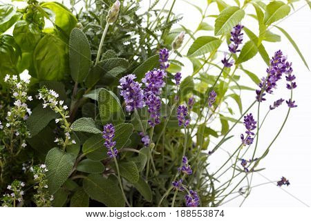 bunch of garden fresh herbs in over white isolated background