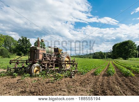 Vintage Tractor in Farm Field with Dramatic Blue Sky and Clouds. Rows of Green Crops are growing