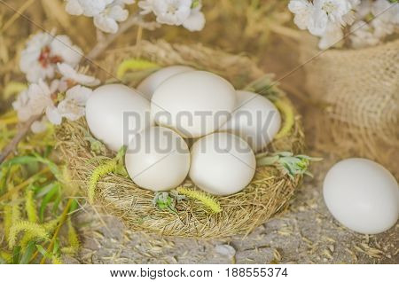 Freshly Laid Eggs In Hay Nest