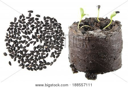Seeds and seedling of Nigella sativa (black-caraway) isolated on white background
