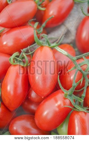 Red Ripe Tomatoes Tumbling Out Of A Brown Canvas  Bag