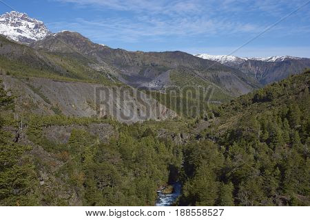 Forested valley of the River Laja as it flows through Laguna de Laja National Park in the Bio Bio region of Chile.