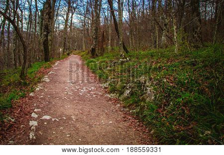 Pathway in the national park in plitvice lakes