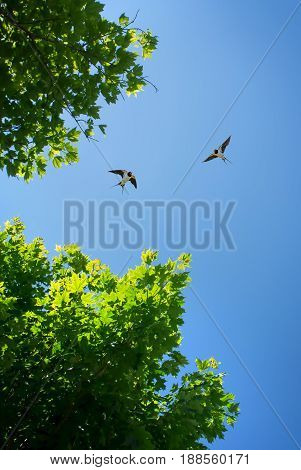 Free flying birds swallow on blue sky background vertical image