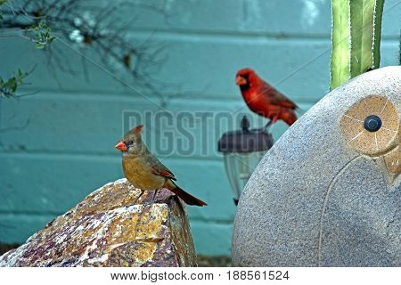 Male and female northern cardinals standing on garden ornaments