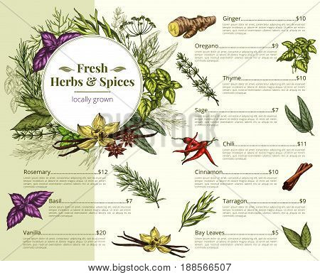 Herbs shop price menu for spices and seasonings. Vector design of ginger, oregano and thyme or sage and chili pepper. Fresh organic tarragon, bay leaf and vanilla or rosemary flavorings