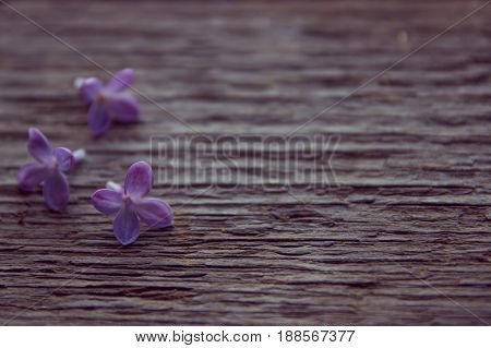 Lilac Flowers Close Up. Old Wooden Texture
