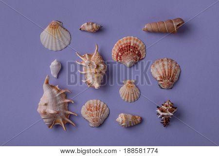 Beautiful Arrangement Of Different Seashells