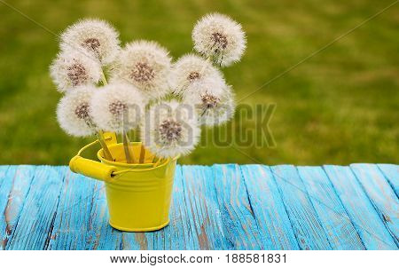Yellow Little Flowers Dandelions Grow Outdoors