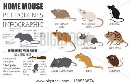 Pets_rodents_mouse_7