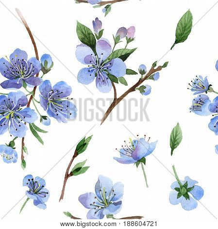 Wildflower cherry flower pattern in a watercolor style isolated. Full name of the plant: cherry, hulthemia, rosa. Aquarelle wild flower for background, texture, wrapper pattern, frame or border.