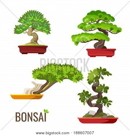 Set of bonsai Japanese trees grown in containers vector illustration isolated on white. Green tree with massive trunk growing in miniature pot