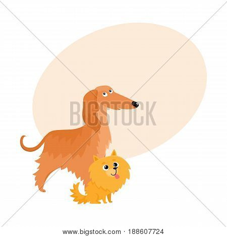 Couple of cute, funny dog characters - Afghan hound and Pomeranian spitz, cartoon vector illustration with space for text. Lovely Afghan hound and Pomeranian spitz characters, dog breeds