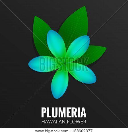 Plumeria. Hawaiian flower Frangipani. Tropical flower with leaves. Botanical exotic plant.