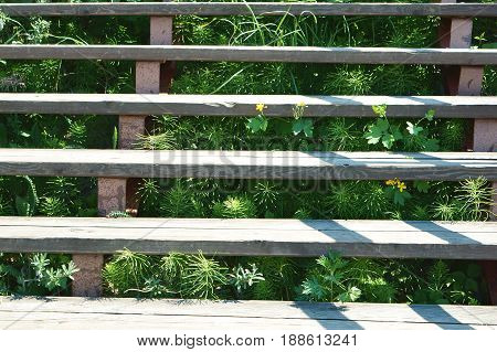 The stairs on the street have grown grass and the plants are growing between stairs.