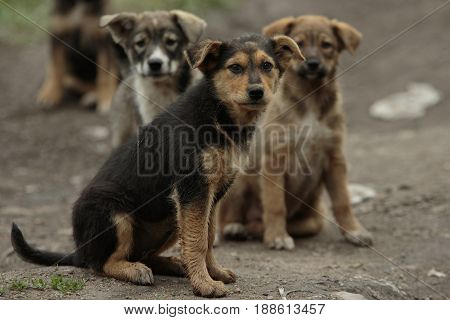 Several pooch street puppies with sad muzzles sits together on the ground