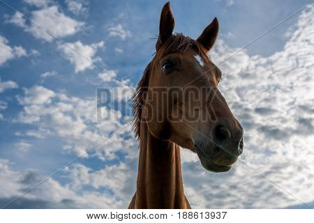 A beautiful red horse with clouds and a blue sky