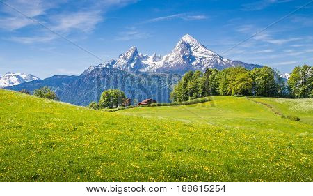 Idyllic landscape in the Alps with fresh green meadows and blooming flowers and snowcapped mountain tops in the background Nationalpark Berchtesgadener Land Bavaria Germany