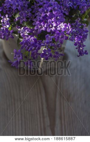 Bellflowers is in the grey pot on the wooden background
