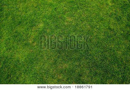 Groen gras textuur bovenaanzicht