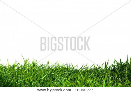 Green grass close up isolated on white background