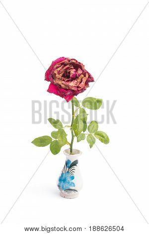 wilted roses in a vase isolated on white background