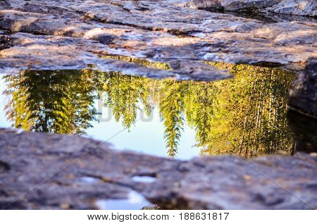 tree forest reflection in puddle at rocky floor landscape