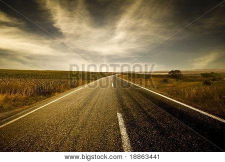 Asphalt road between fields of corn and trees