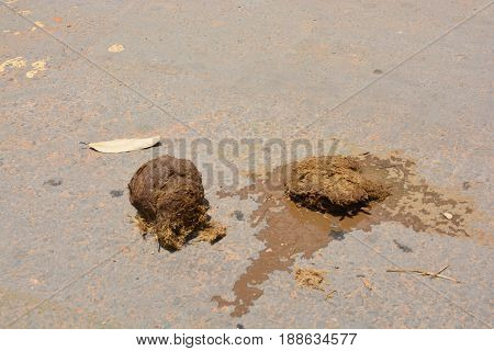 Elephant dung, Elephant excrement on the floor