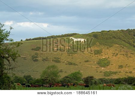 Litlington White Horse in May 2017. Chalk downland figure on South Downs on Hindover Hill.