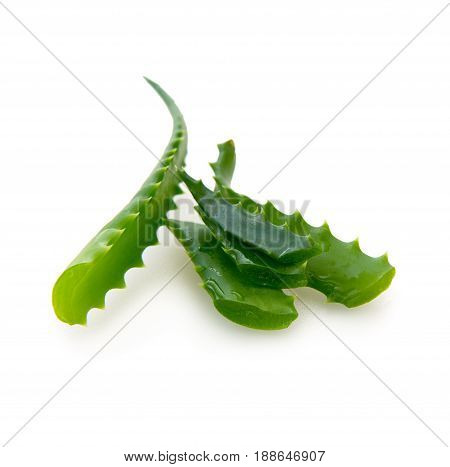 Fresh aloe vera leaves isolated on white background.Aloe vera with water drops .