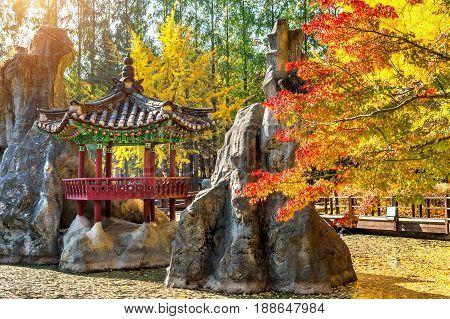 Autumn on Nami island in south Korea.