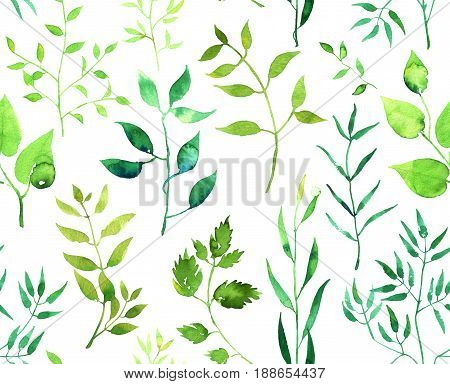 Seamless watercolor pattern with green branches and leaves isolated on white background. Hand painted illustration.