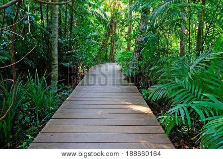 Boardwalk in the tropical rainforest, Krabi, Thailand