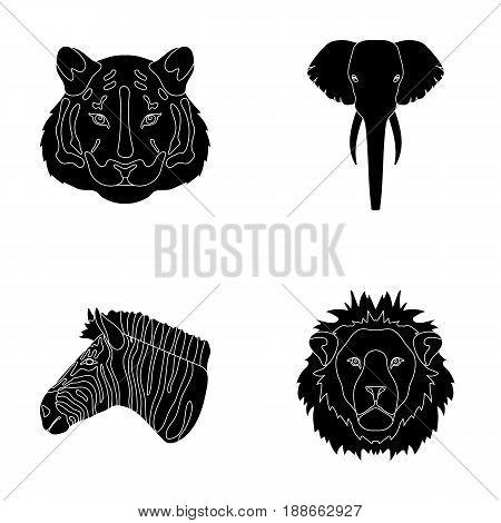 Tiger, lion, elephant, zebra, Realistic animals set collection icons in black style vector symbol stock illustration .