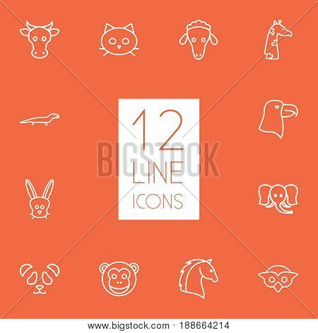 Set Of 12 Alive Outline Icons Set.Collection Of Horse, Monkey, Owl And Other Elements.
