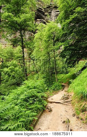 Beautiful landscape of Bohemian Switzerland with forests and gorges