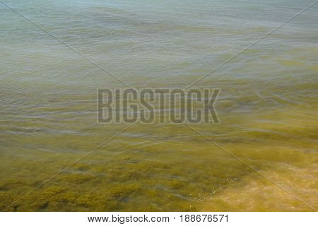 Coastal Sea Waves. Seawater With Seaweed. Coastal Algae. Sea Beach.