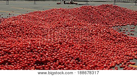 Colorado tomato battle at Copper Mountain Ski Resort - June 25, 2011. Tomatoes are ready for the battle.  Colorado tomato battle is an annual summer event at Copper Mountain Ski Resort