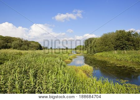 Towpath In Summer