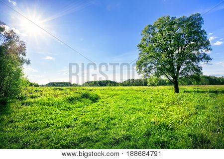 Field with green grass and a tree under the bright summer sun