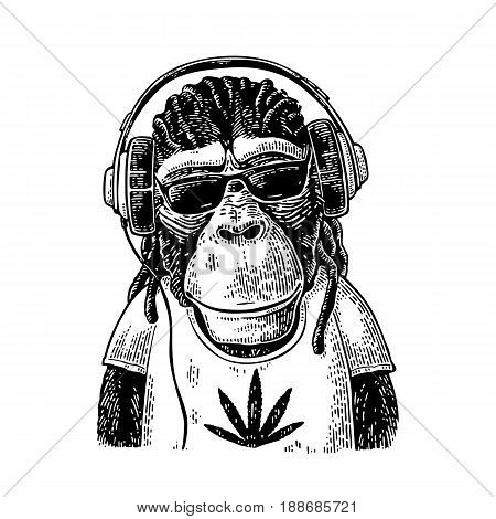 Monkey hipster with dreadlocks in headphones, sunglasses and t-shirt with marijuana leaf. Vintage black engraving illustration for poster. Isolated on white background