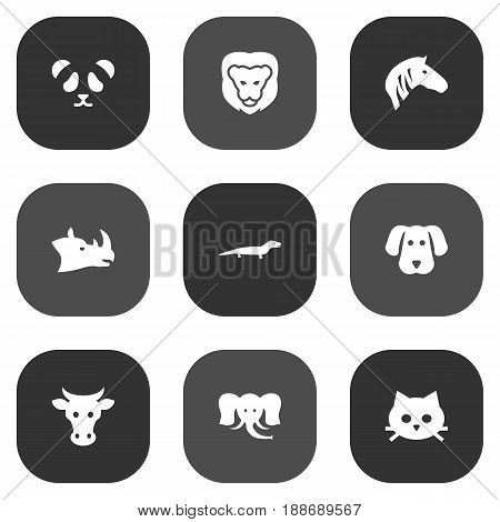 Set Of 9 Zoology Icons Set.Collection Of Pussy, Wildcat, Horse And Other Elements.