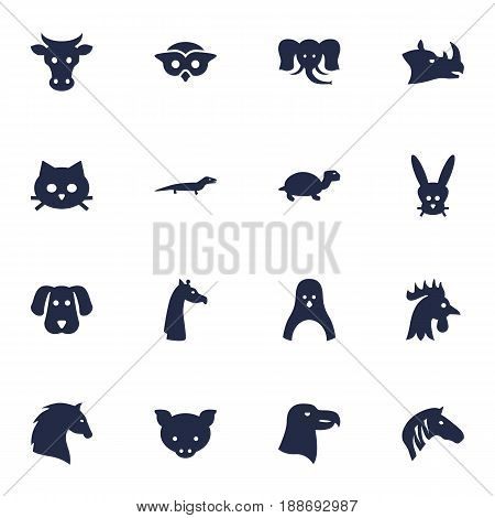 Set Of 16 Zoo Icons Set.Collection Of Tortoise, Steed, Rhinoceros And Other Elements.