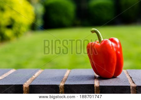 Fresh red bell pepper sat on a wall
